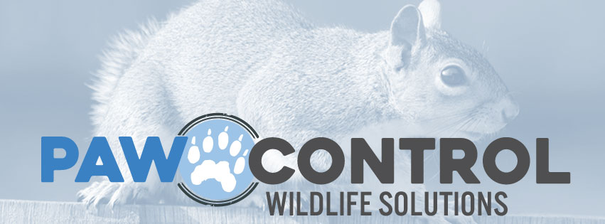Paw Control Wildlife Solutions