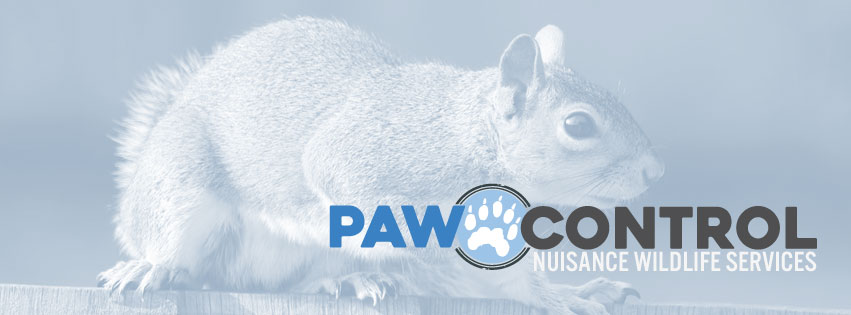 Paw Control Nuisance Wildlife Services